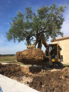 Plantation-Bedoin---Flassan--Crillon-le-brave---Saint-Pierre-de-Vassols---Caromb---Mazan---Le-Barroux---Vaucluse-bedoin