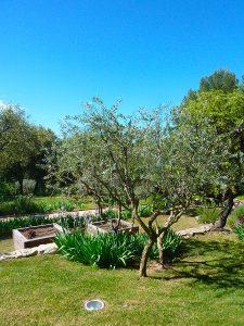 Sarl-Olivieri-jardin magnifique Paysagiste-Bedoin-Flassan-Crillon-le-brave-Saint-Pierre-de-Vassols-Modene-Caromb-Mazan-Vaucluse-pres-du-mont-ventoux