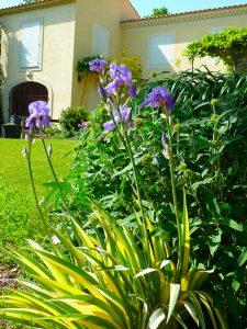 Sarl-Olivieri-pour-les-jardins-Paysagiste-Bedoin---Le-Barroux---Mallemort-du-comtat---Villes-sur-Auzon-Mormoiron-Beaumes-de-Venise-Carpentras-Vaucluse-pres-du-mont-ventoux