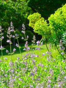 Sarl-Olivieri-pour-les-jardins-Paysagiste-Bedoin---Le-Barroux---Mallemort-du-comtat---Villes-sur-Auzon-Mormoiron-a Beaumes-de-Venise-Carpentras-Vaucluse-pres-du-mont-ventoux