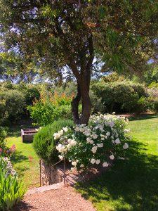 jardin professionnel pour-les-jardins-Paysagiste-Bedoin---Le-Barroux---Mallemort-du-comtat---Villes-sur-Auzon-Mormoiron-a Beaumes-de-Venise-Carpentras-Vaucluse-pres-du-mont-ventoux