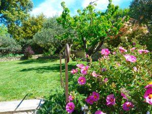 superbe jardin Sarl-Olivieri-Paysagiste-Bedoin-Flassan-Crillon-le-brave-Saint-Pierre-de-Vassols-Modene-Caromb-Mazan-Vaucluse-pres-du-mont-ventoux
