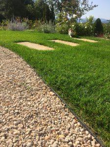 magnifique engazonnement Sarl Olivieri jardin Paysagiste Bedoin - Flassan - Crillon le brave - Saint Pierre de Vassols - Modene - Caromb - Mazan Vaucluse
